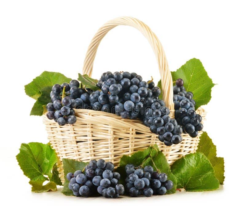 Плетеная корзина вполне свежих красных виноградин на белизне стоковые изображения rf