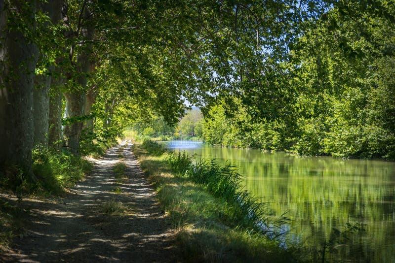 Плоские деревья на краю канала du Midi на юге  Франции стоковое изображение