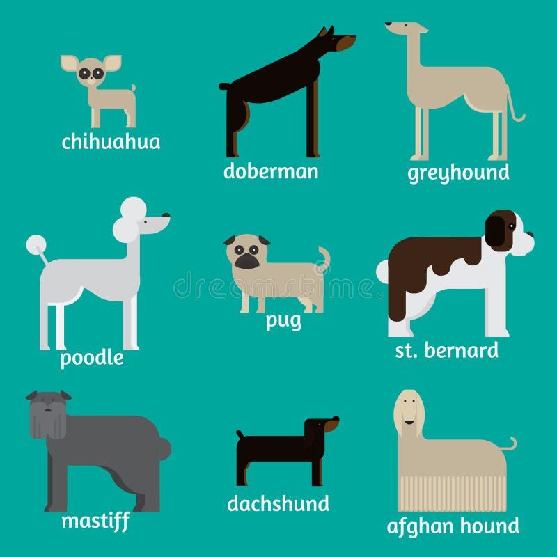 Плоские характеры собаки установили, чихуахуа собрания домашнего животного шаржа, doberman, mastiff, afgan борзая, St Bernard, мо бесплатная иллюстрация