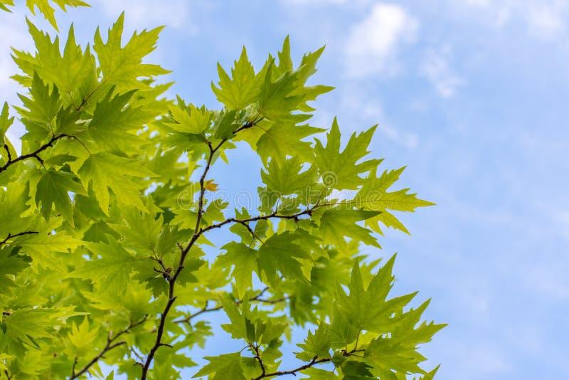 Плоское дерево стоковые изображения