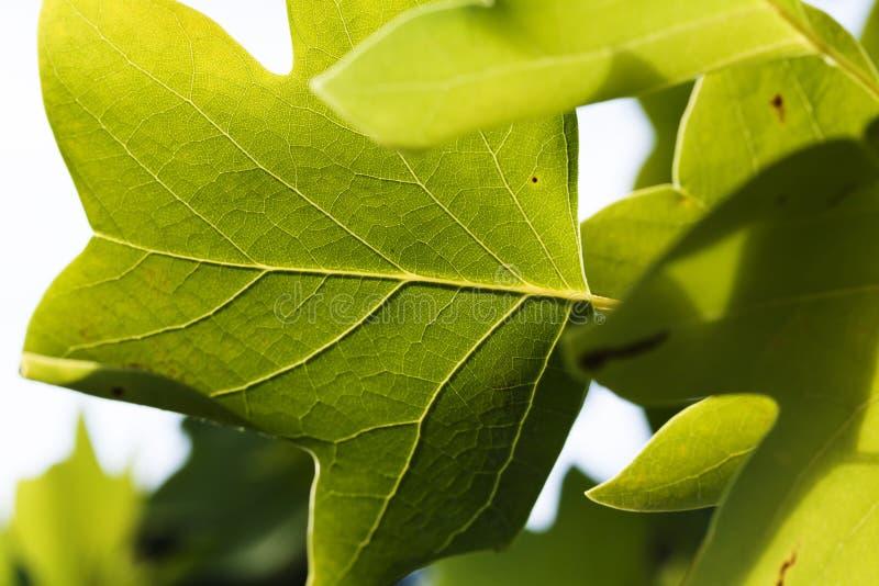 Плотная съемка нижней стороны зеленых листьев стоковые фотографии rf