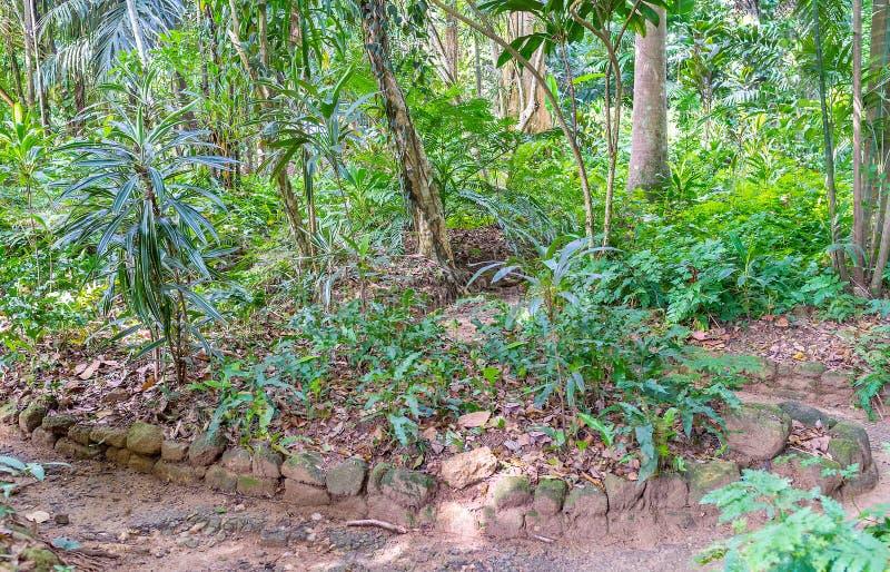 Плотный лес стоковое фото rf