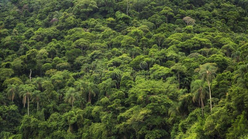 Плотный тропический тропический лес в Бразилии, предпосылке природы стоковые фото
