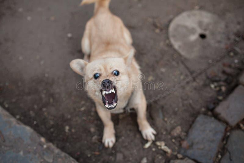 плохая собака стоковое изображение