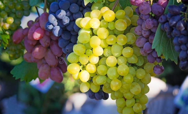 Плодоовощи виноградин различных рангов на выставк-окне магазина стоковые фото