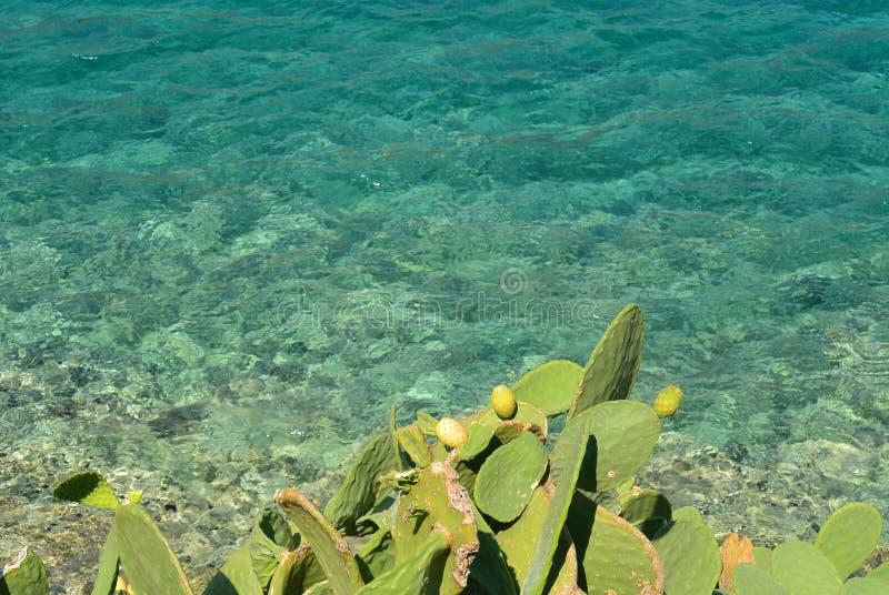 Плодоовощи на острове Spinalonga стоковые изображения