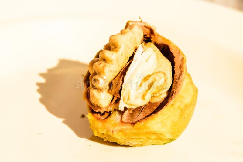 Плодоовощ грецкого ореха стоковая фотография