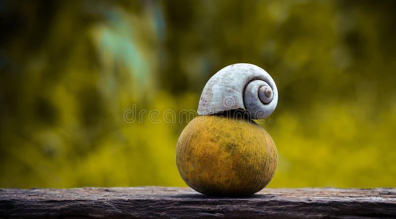 Плодоовощ и улитка Santol стоковое изображение