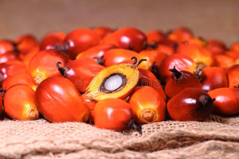 Плодоовощ масличной пальмы стоковая фотография rf