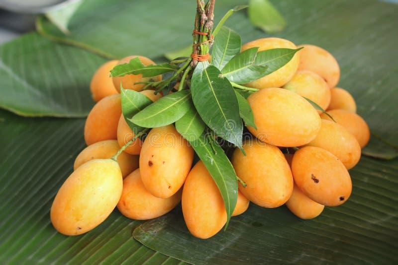 Плодоовощ сливы Мэриан - плодоовощ Азии стоковые изображения