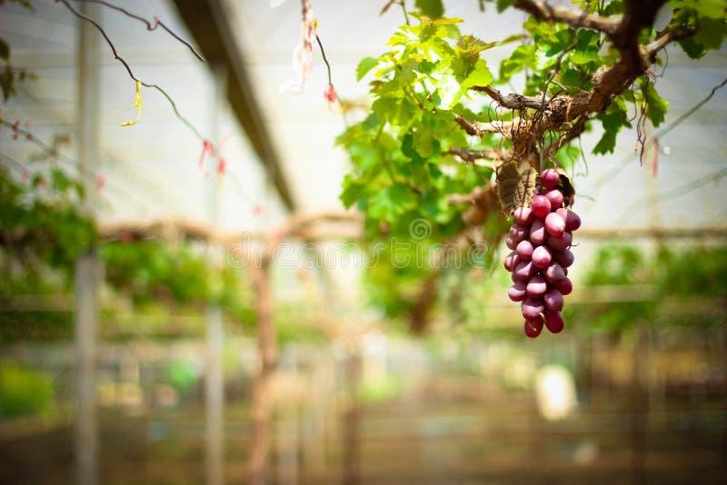 плодоовощ Таиланд стоковое фото
