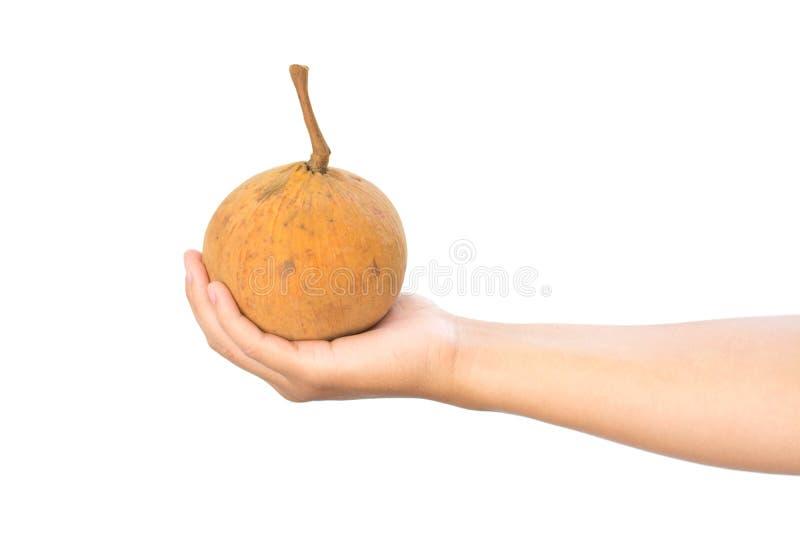 Плодоовощ Santol в наличии стоковое фото rf