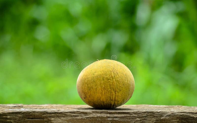 Плодоовощ Santol стоковые фотографии rf