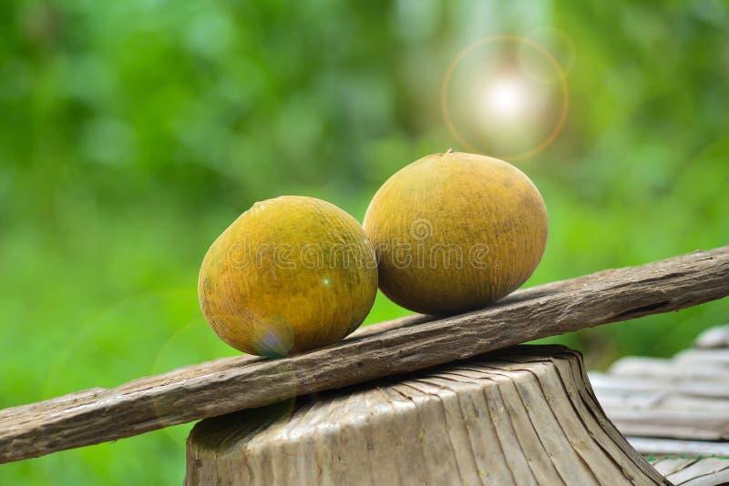 Плодоовощ Santol стоковые изображения