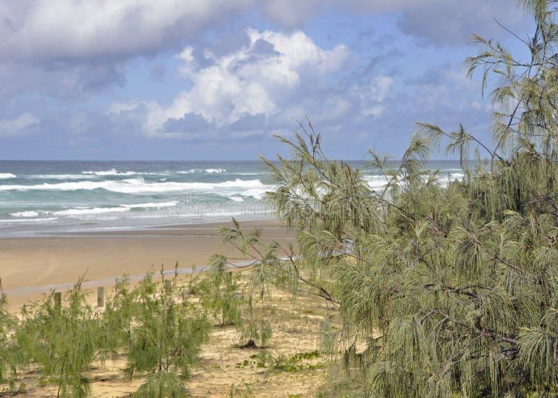 Пляж заводи Eli, остров Fraser стоковое изображение rf
