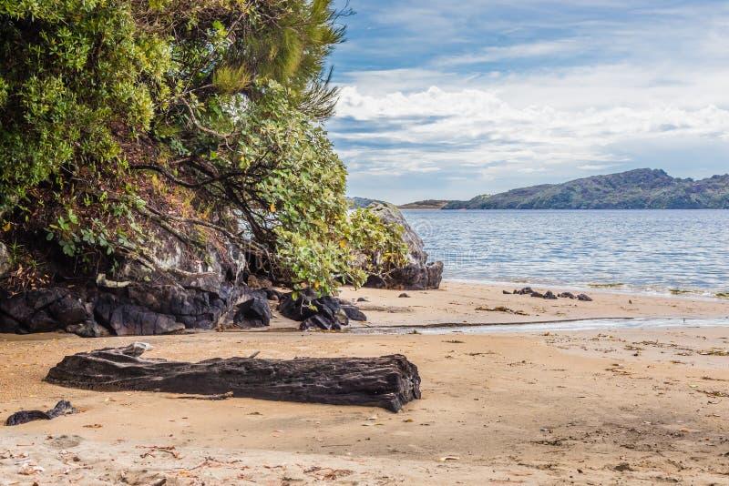 Пляж залива Ли, остров Ulva, Новая Зеландия стоковые фото