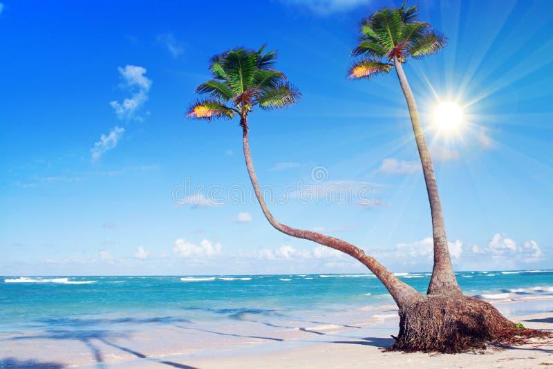 Пляж и ладонь мечты Вест-Инди стоковое изображение