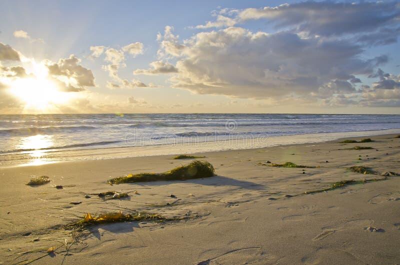 Пляж Карлсбада стоковые фотографии rf