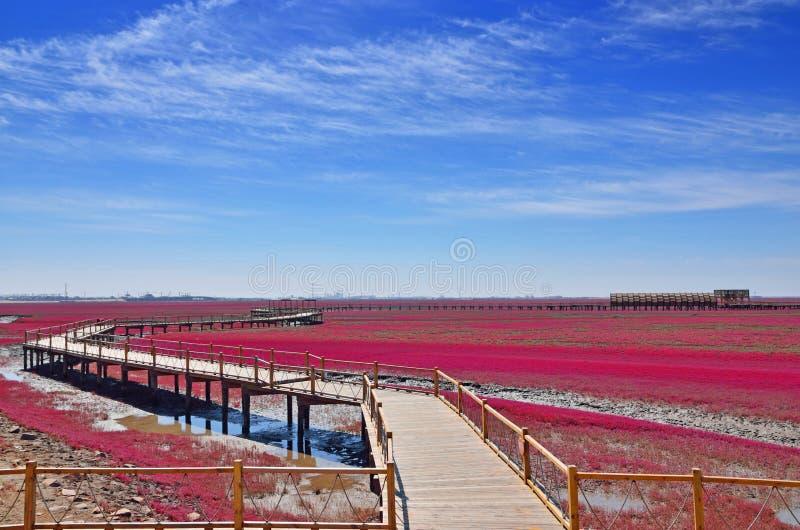 Пляж красного цвета Panjin стоковая фотография rf