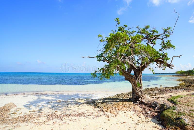 Пляж Куба Guardalavaca стоковое фото