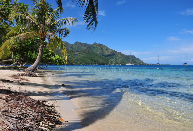 Пляж на Moorea, Таити стоковые изображения