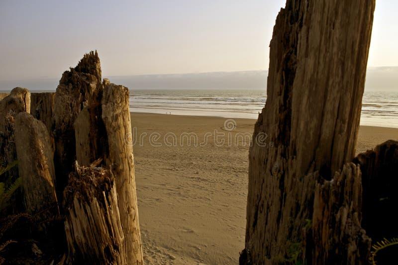 Пляж океана стоковое изображение