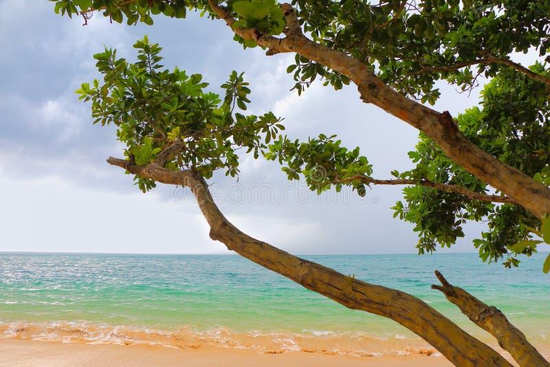 Пляж острова стоковое изображение