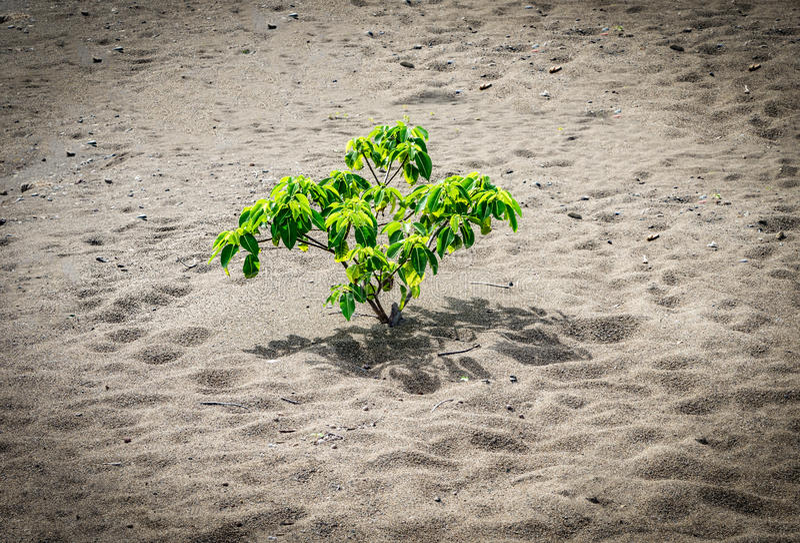Пляж отработанных формовочных смесей - малое дерево стоковое фото