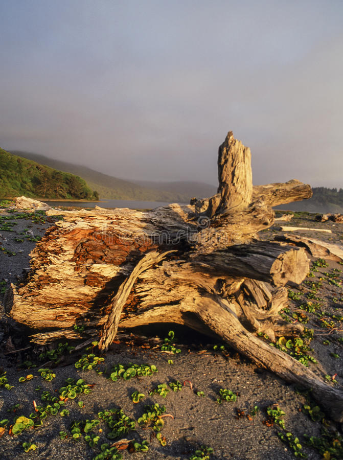 Пляж парка штата Калифорнии пункта Патрика стоковые изображения