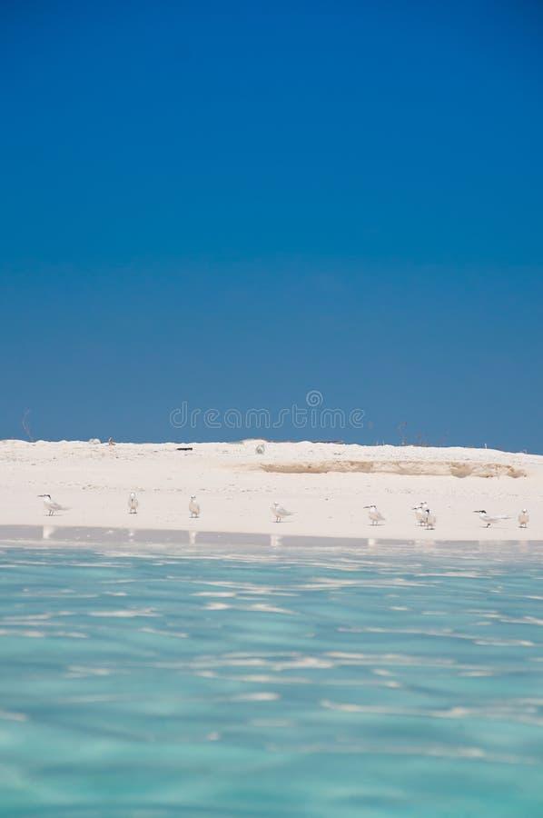 Птицы на песчаном пляже стоковое изображение
