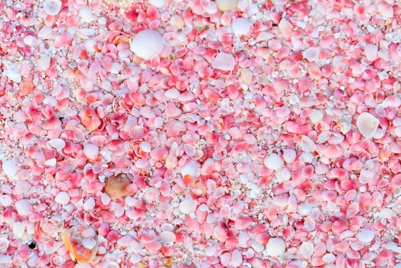 Пляж песка пинка Барбуды стоковое фото