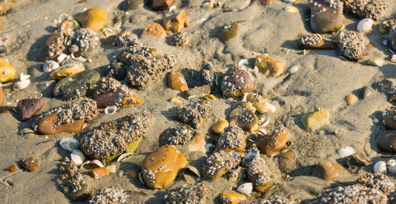 Пляж песка Северного моря от конца стоковая фотография