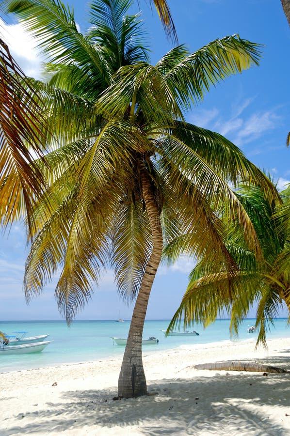 Пляж рая стоковая фотография