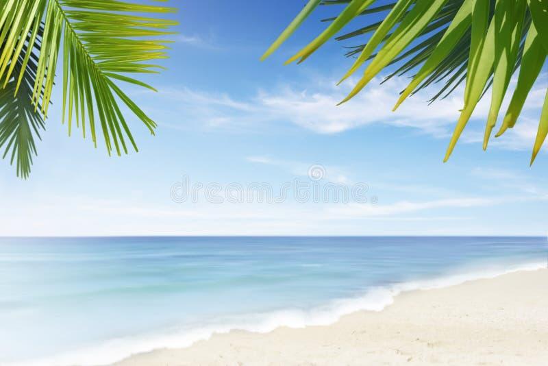 пляж сиротливый стоковые изображения rf