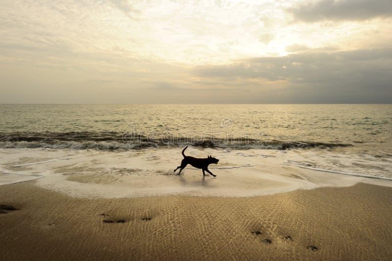 Пляж собаки стоковое фото