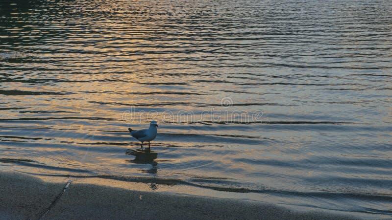 Пляж с чайкой стоковое изображение