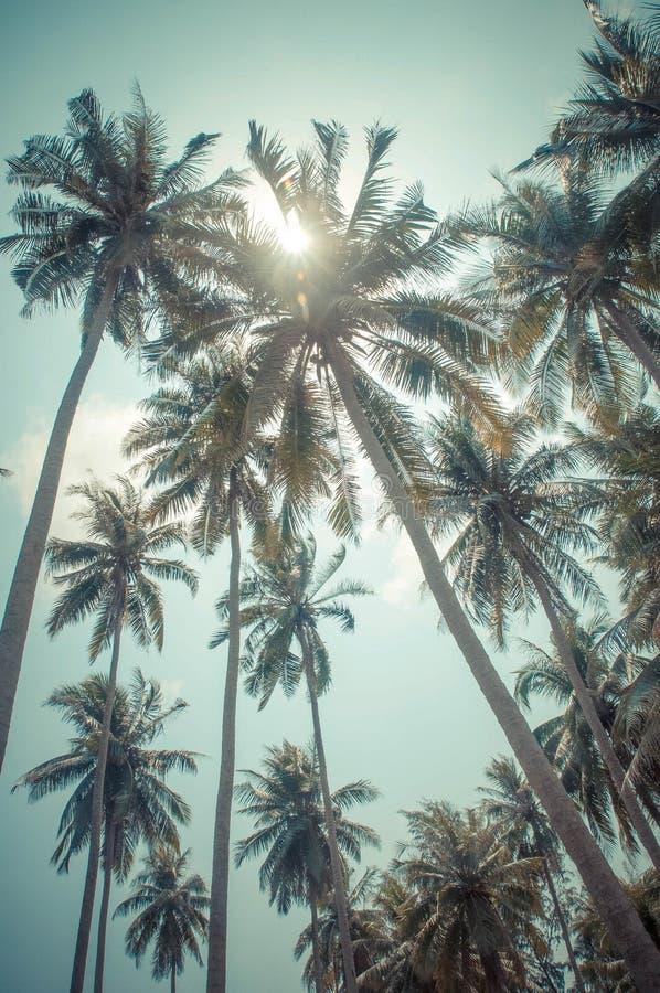 Пляж фото с кокосом стоковая фотография