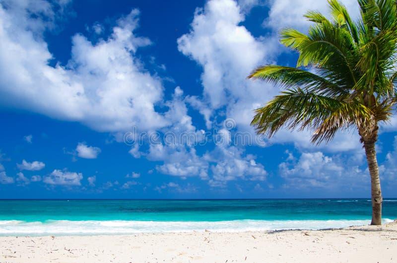 Download Пляж стоковое изображение. изображение насчитывающей океан - 33730217