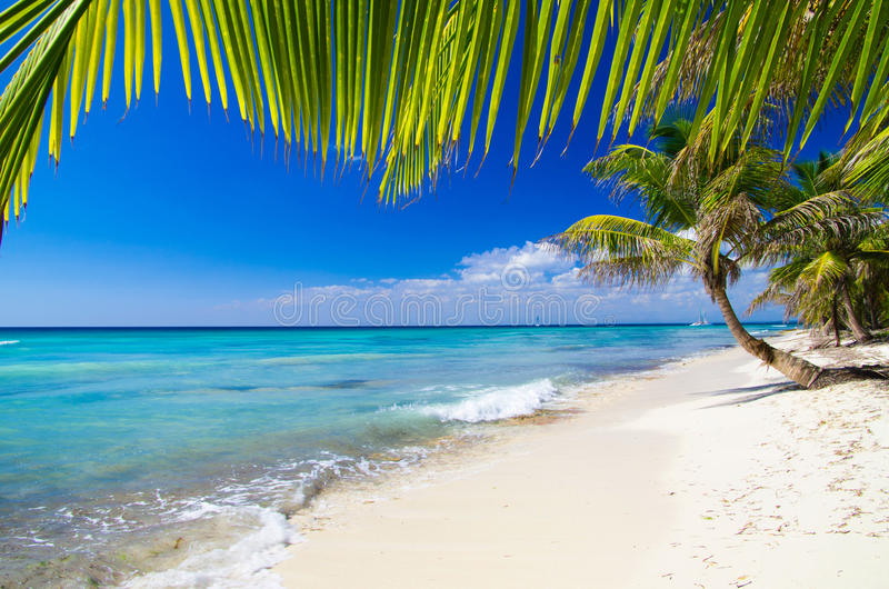 Download Пляж стоковое фото. изображение насчитывающей доминиканско - 33730314