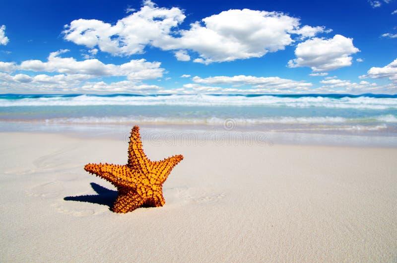 Download Пляж стоковое изображение. изображение насчитывающей рыбы - 33730381