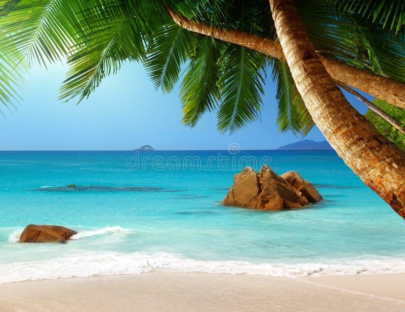 Пляж Anse Лациа на острове Praslin, Сейшельских островах стоковые изображения rf