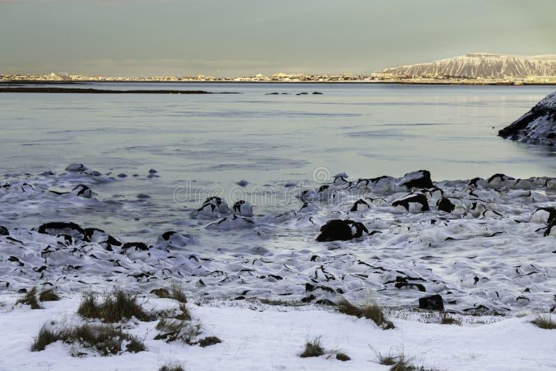 Пляж Snowy стоковые изображения
