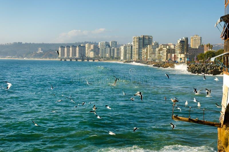 Пляж Vina Del Mar в Чили стоковые изображения