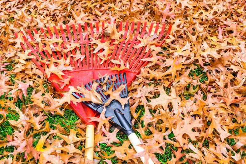 Работа двора, падение выходит в Кентукки с граблями стоковое фото rf
