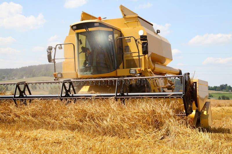 Работа жмущ зернокомбайн в поле пшеницы стоковые фотографии rf