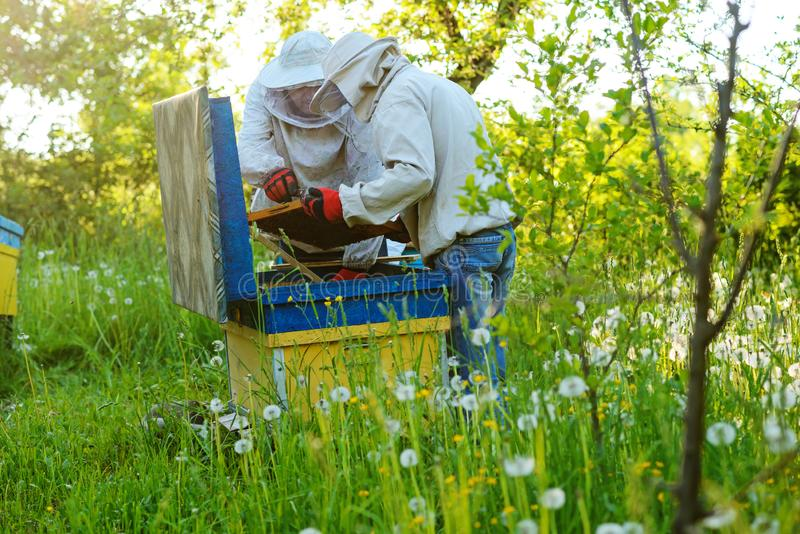 работа 2 лета дня beekeepers apiary солнечная Лето стоковая фотография