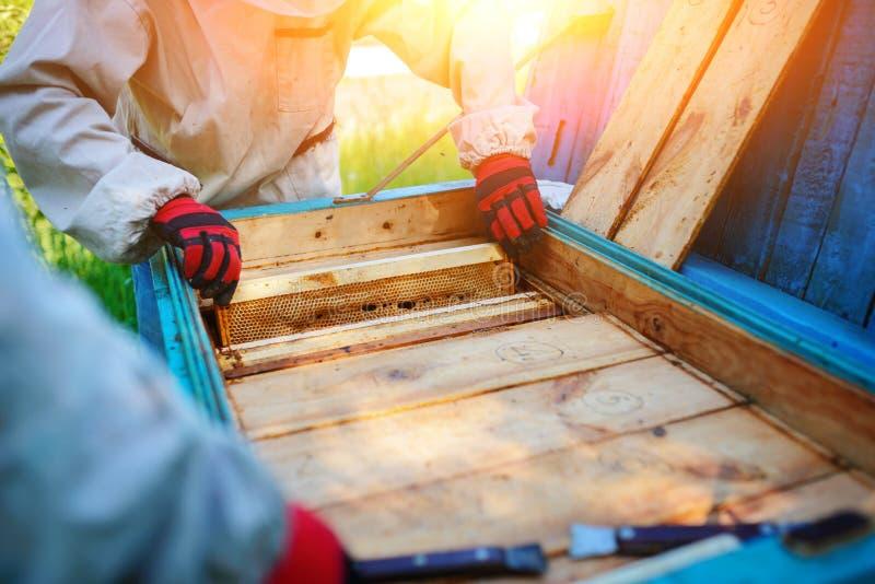 работа 2 лета дня beekeepers apiary солнечная Лето стоковые фотографии rf