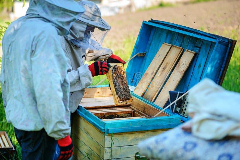 работа 2 лета дня beekeepers apiary солнечная Лето стоковое фото