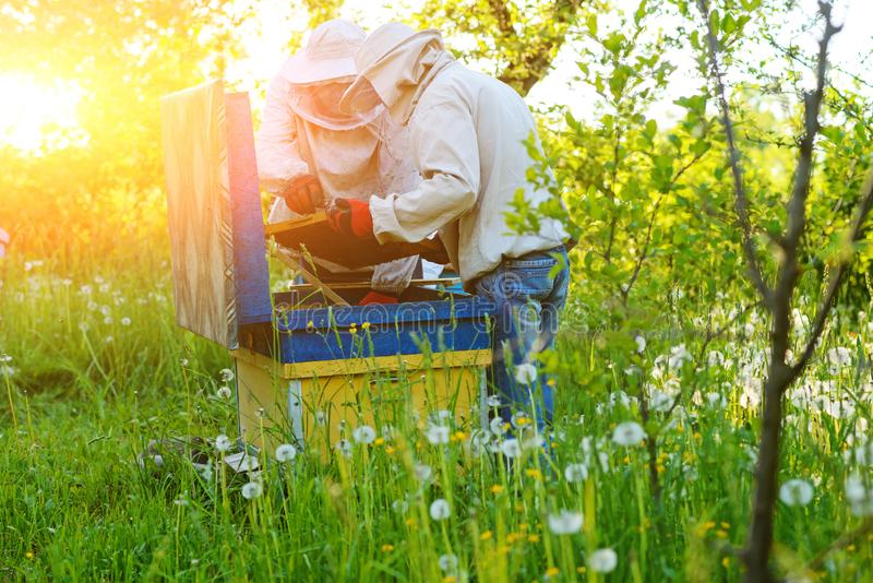 работа 2 лета дня beekeepers apiary солнечная Лето стоковые изображения rf