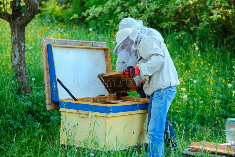 работа 2 лета дня beekeepers apiary солнечная Лето стоковое изображение